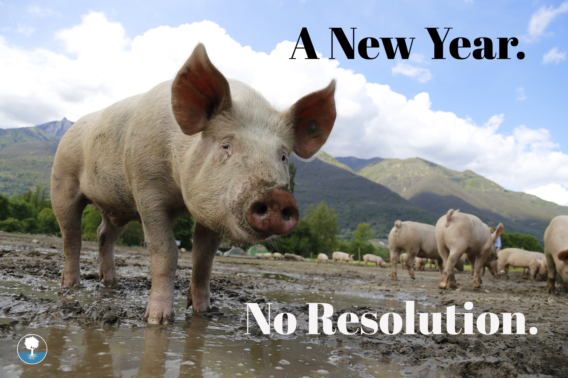A New Year.jpg