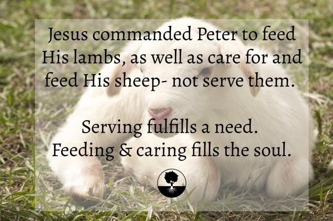 Feed & Care.jpg